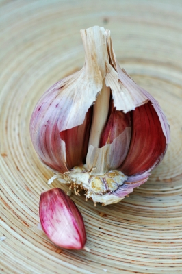 Bulb_of_Garlic